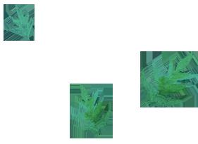 hojas top